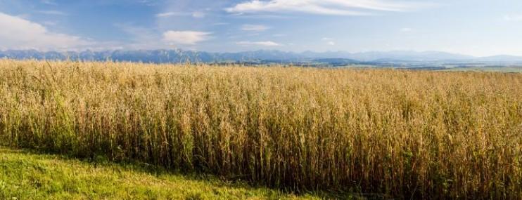 KUKUA, nutrición con siembra y consumo de Moringa