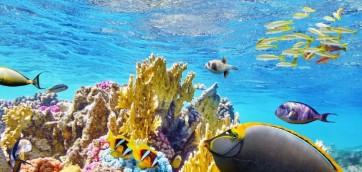 Por un Arrecife Vivo trabajan más de 60 organizaciones