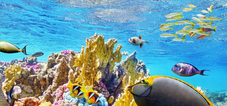 Arrecife Vivo